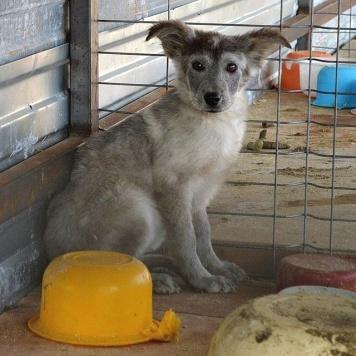 Ирисочка - Собаки в добрые руки