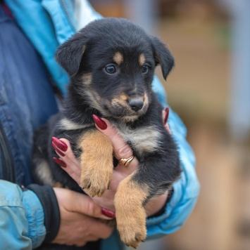 Щеночек - Собаки в добрые руки