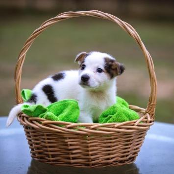 Фикс - Собаки в добрые руки