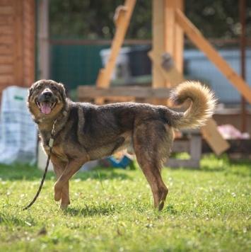 Валик - Собаки в добрые руки