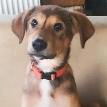 Джакуй - Собаки в добрые руки