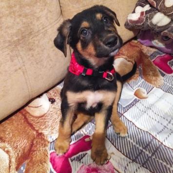 Аякс - Собаки в добрые руки