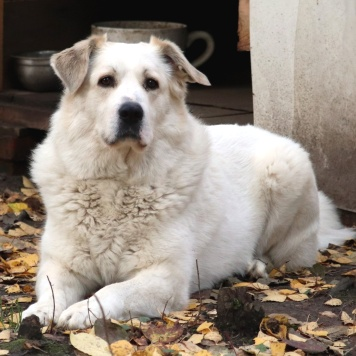 Барюша - Собаки в добрые руки