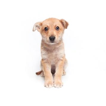 Мэтью - Собаки в добрые руки