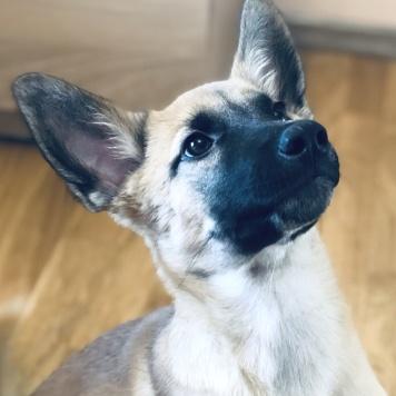 Джой - Собаки в добрые руки
