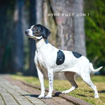 Муна - Собаки в добрые руки