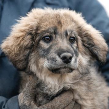 Жозефина - Собаки в добрые руки
