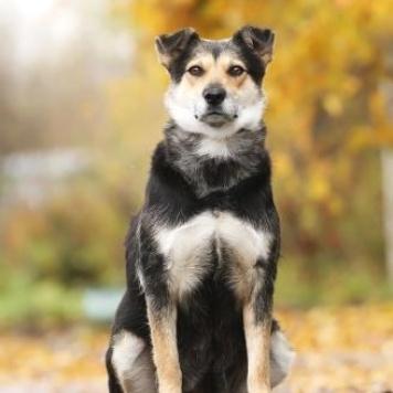 Августа - Собаки в добрые руки