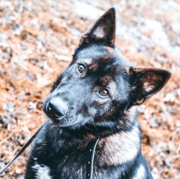 Альт - Собаки в добрые руки