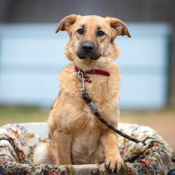 Паночка - Собаки в добрые руки