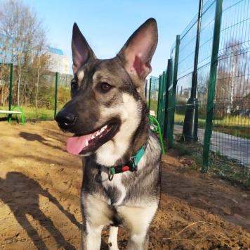 Волчок - Собаки в добрые руки