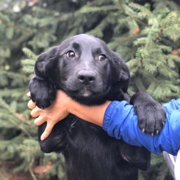 Вайна - Собаки в добрые руки