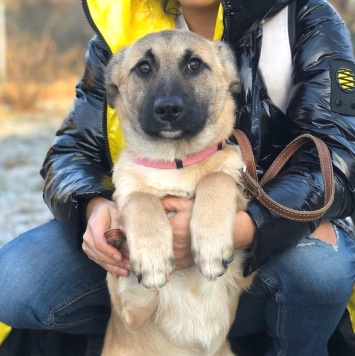 Мэнди - Собаки в добрые руки