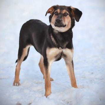 Очаровашка Мира - Собаки в добрые руки