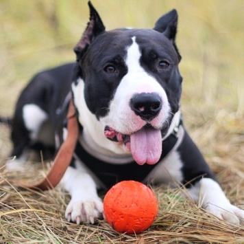 Таксон - Собаки в добрые руки