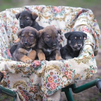 Щеночки - Собаки в добрые руки