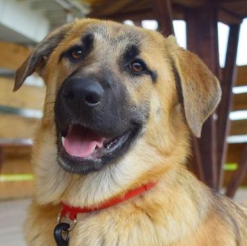 Альфия - Собаки в добрые руки