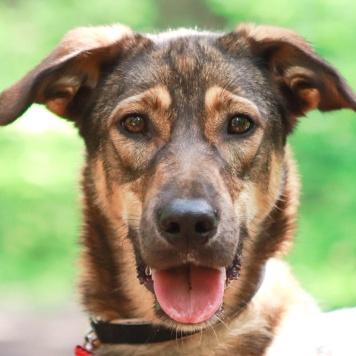 Руслана - Собаки в добрые руки