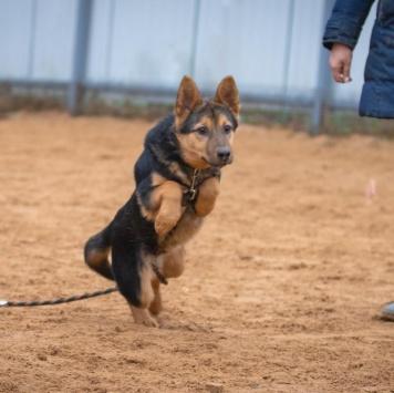 Гати - Собаки в добрые руки