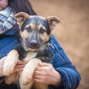 Габриэла - Собаки в добрые руки