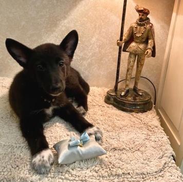 Кефирчик - Собаки в добрые руки