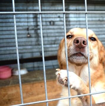 Лиля - Собаки в добрые руки