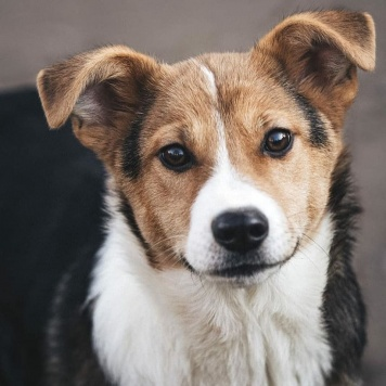 Бароша - Найденные собаки
