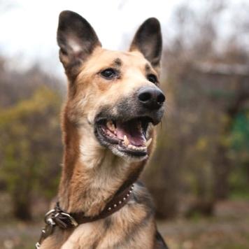 Кора - Собаки в добрые руки
