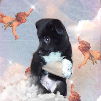 Реми - Собаки в добрые руки