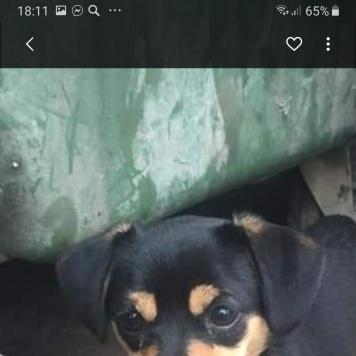 Маня - Собаки в добрые руки