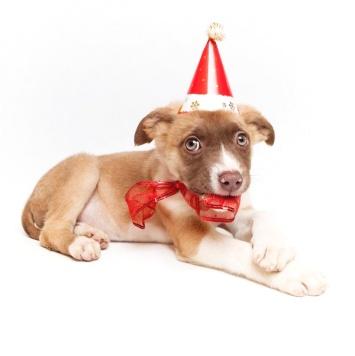 Мари - Собаки в добрые руки