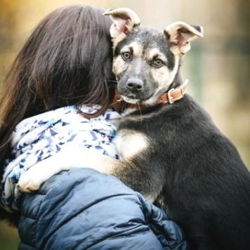 Джекси - Собаки в добрые руки
