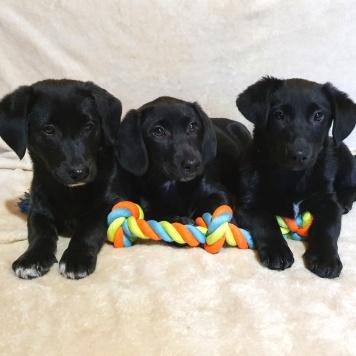 Черненькие карапузы - Собаки в добрые руки
