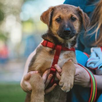 Солнечный Чак - Собаки в добрые руки