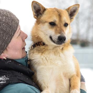 Фокс - Собаки в добрые руки