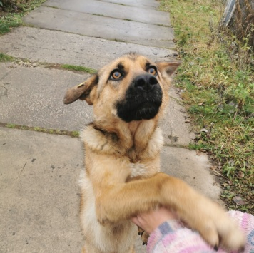 Саманта - Собаки в добрые руки
