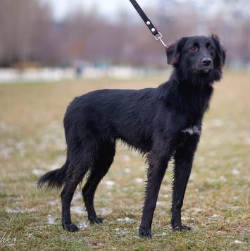 Чарли - Собаки в добрые руки