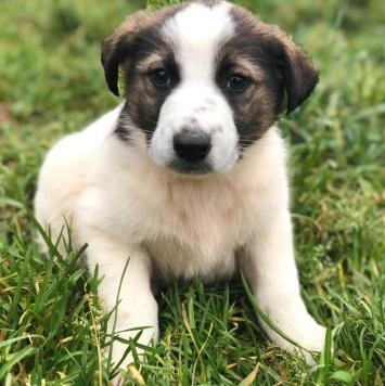 Люкс - Собаки в добрые руки