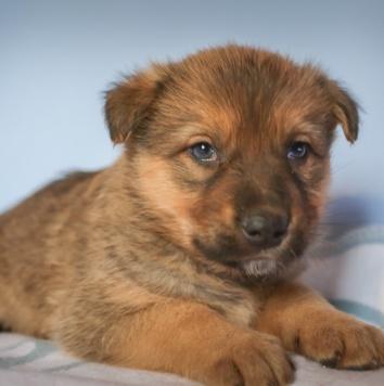 Есенин - Собаки в добрые руки