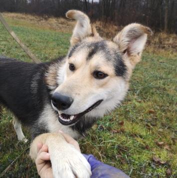 Крекер - Собаки в добрые руки