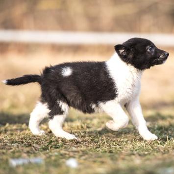 Гаечка - Собаки в добрые руки
