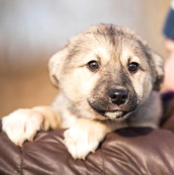 Барса - Собаки в добрые руки