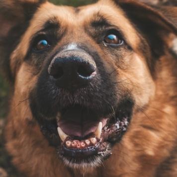 Ясмина - Собаки в добрые руки
