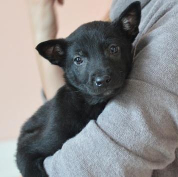 Бэлль - Собаки в добрые руки