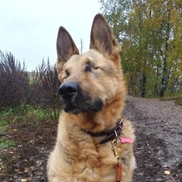 Аттис - Собаки в добрые руки