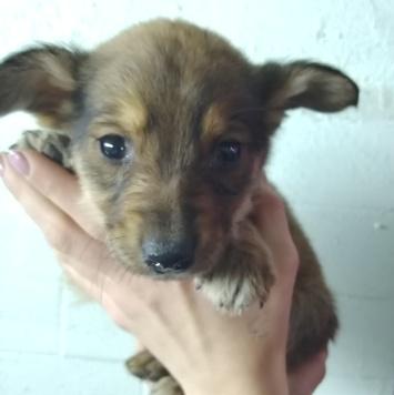 Хвост - Собаки в добрые руки