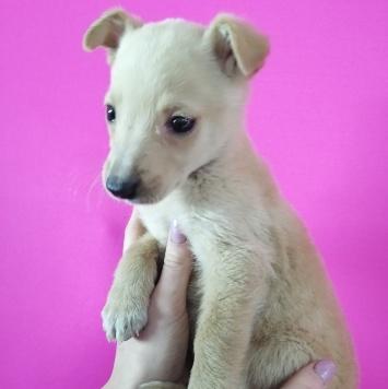 Перси - Собаки в добрые руки
