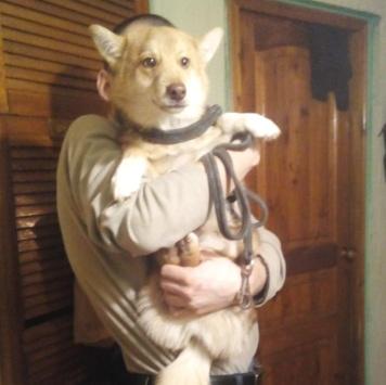 Яшенька - Собаки в добрые руки