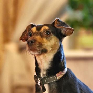Шоколадка - Собаки в добрые руки