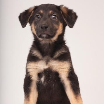 Эстон - Собаки в добрые руки